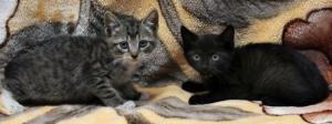 kittens31n-1-web