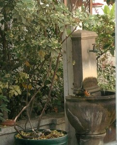Side fountain with Oriole