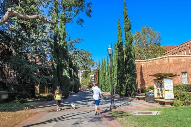 UCLA 208-2