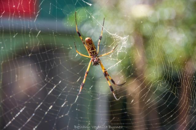 Around the Southland - Florilegia & Naturalia 103 sm